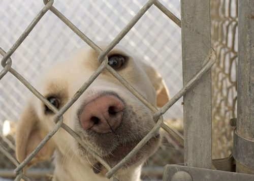 How to: Safely Bring Home a Rescue or Shelter Dog