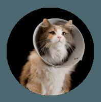 collar-cat