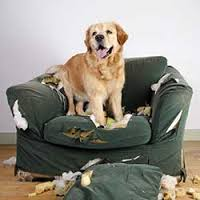 Why Dogs Behave Badley