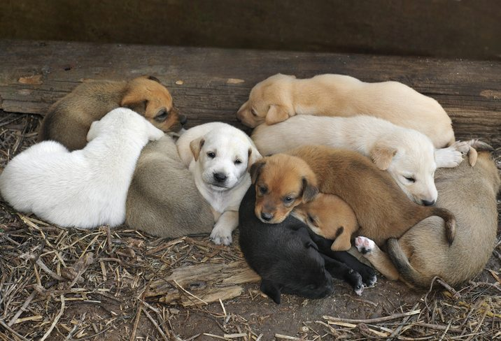 Litter of Ten Puppies